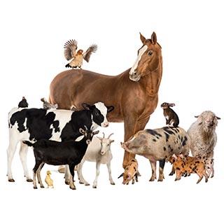 Ashkan Animal Health - Animal Products